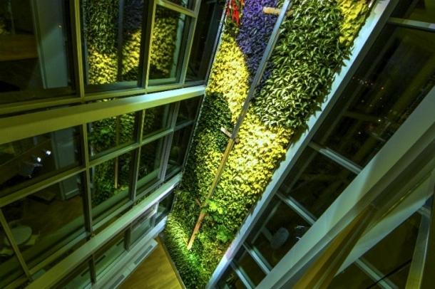 Épülő vertikális kert