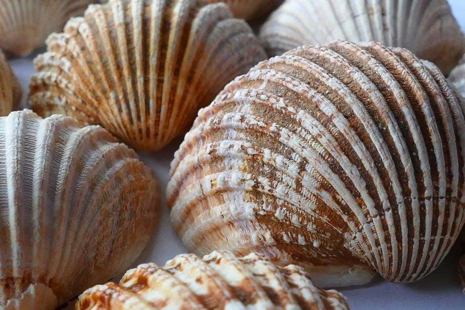 férgek lehetnek kagylókban