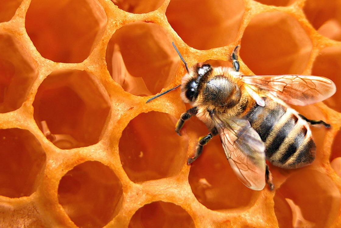méh közös kezelése