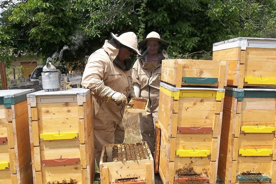 méhészeti kezelés ok nélkül a térd fájdalma