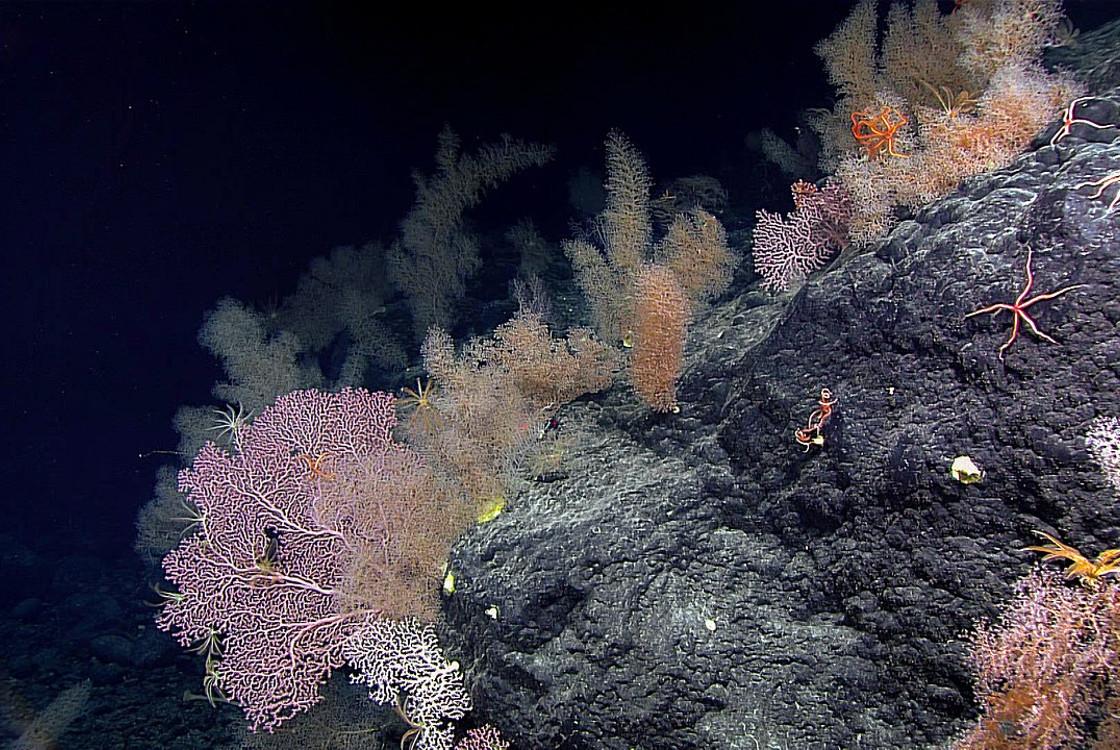 Röpke három év alatt csendben megfőtt a Nagy-korallzátony harmada - Qubit