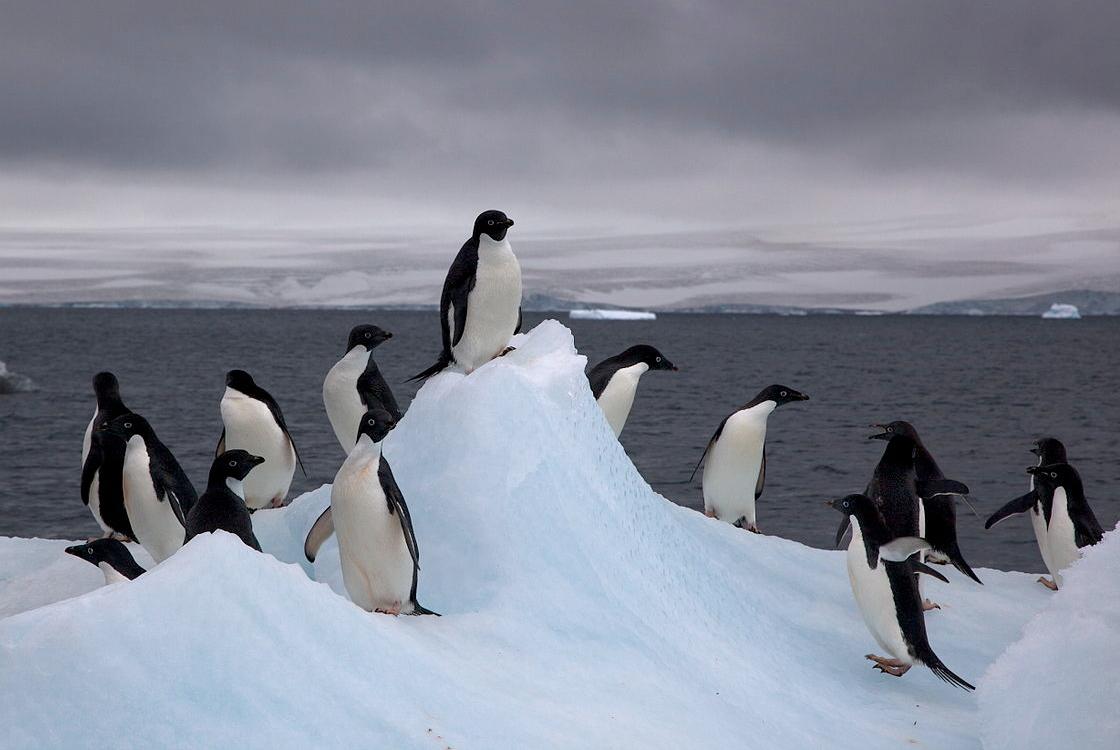 sarkvidéki paraziták kacsa férgek hogyan kell kezelni