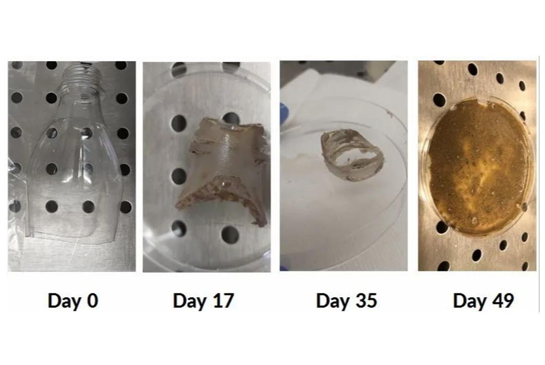 baktérium, amely műanyagot eszik