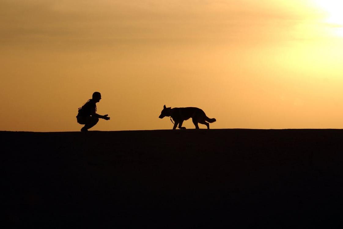 A kutyák erősebben kötődnek a nőkhöz? Már a háziasítás során is meghatározó volt a kapcsolat